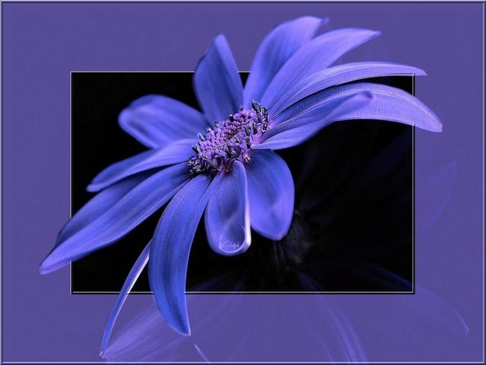 fond d'ecran fleur