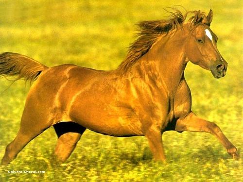 Je m'appelle pinpin le cheval!!!