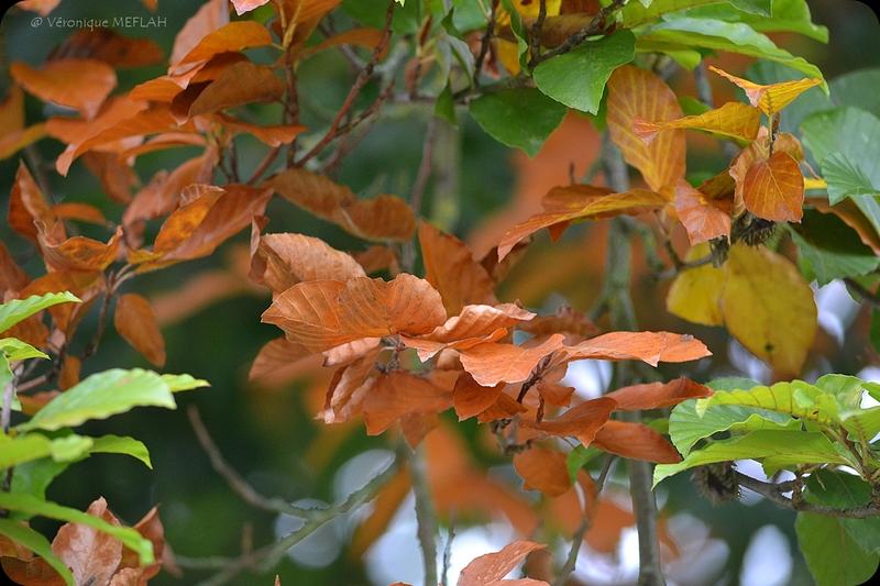 L'automne à Rambouillet 2
