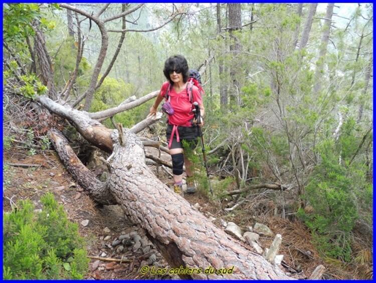 Balagne, la boucle des Finocchi en forêt de Bonifatu