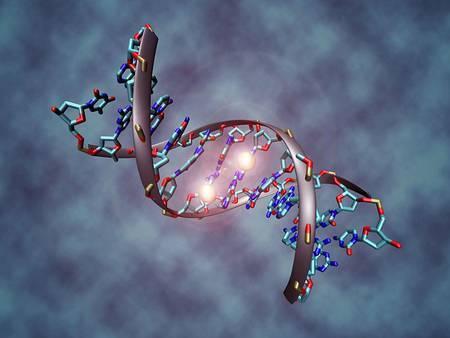 La méthylation de l'ADN correspond à l'ajout d'un groupement méthyle sur un nucléotide.