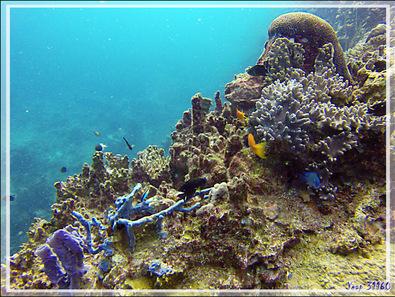 Quelques beautés sous-marines présentées en vrac - Nosy Tsarabanjina - Archipel des Mitsio - Madagascar