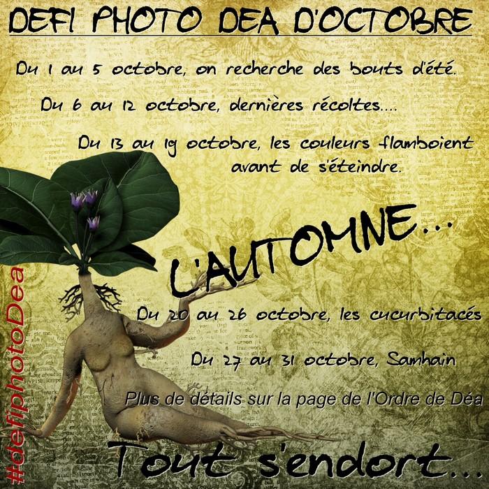 Défi photo Déa