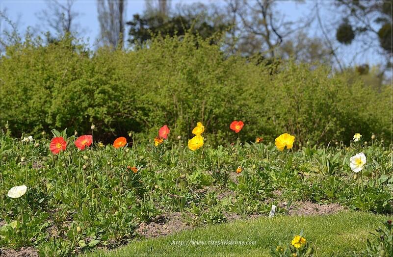 Parc Floral de Paris : Balade parmi les fleurs et les oiseaux