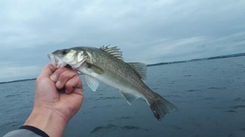 5 touches, 5 poissons