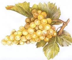 tubes raisin , vignes