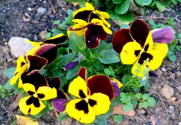 t02 - Fleurs