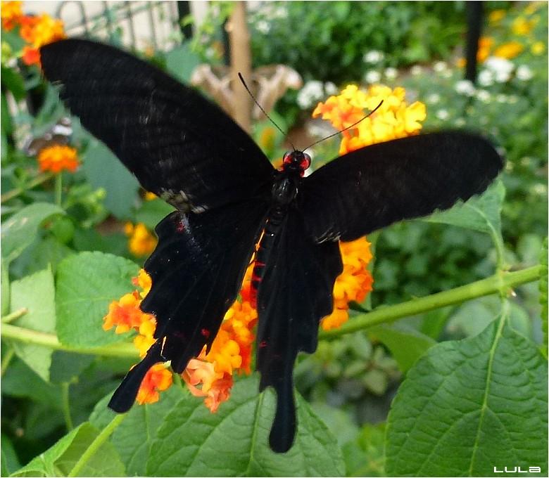 Visite aux papillons en liberté