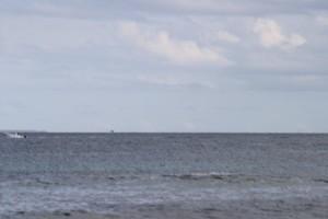 baleine-tival-035.JPG