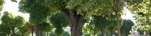 Aux arbres de Victor Hugo