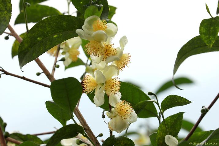 Faune et flore dans les rizières de la réserve naturelle de Pu Luong