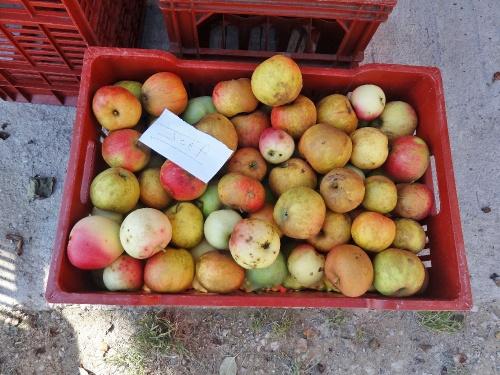 La pressée des pommes chez Sylvain Bouhélier..