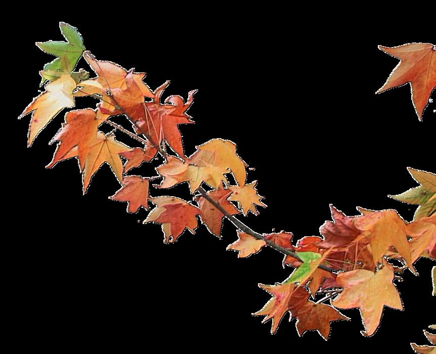 Branches d'automne