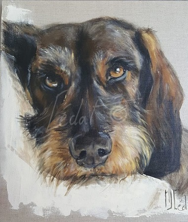 Notre meilleur ami : le chien ...