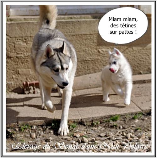 Un humour de Husky - Suite (2 mars 2013)