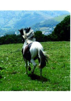 Projet en cours : les contes des animaux des Pyrénées. Les 7 animaux restant en lice