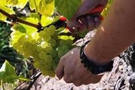 Autour de la vigne
