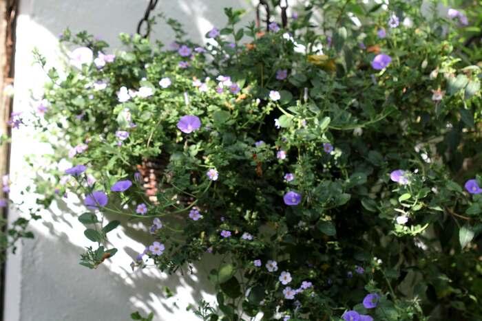 Hanging baskets : le bilan (8/9)