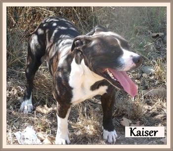 Kaiser 6