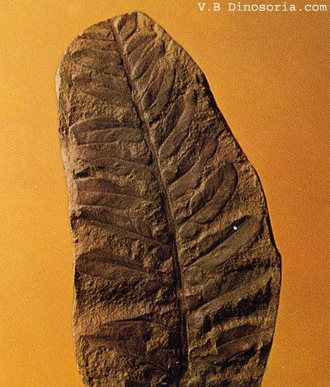 Feuille fossilisée du Carbonifère