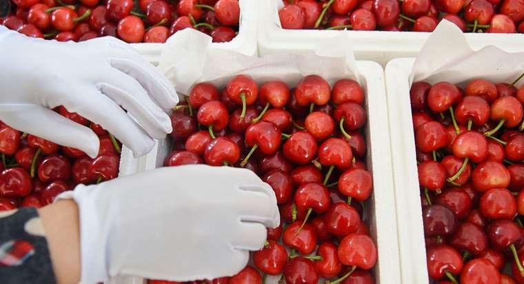 Cerises, fraises, céleris… Voici les fruits et légumes qui contiennent le plus de pesticides