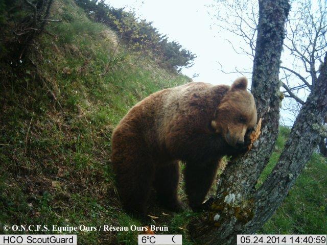 Résultat du suivi des ours pour l'année 2014