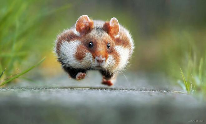 squirrel comedy wildlife photography