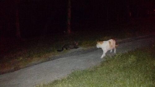 La nuit des chats !
