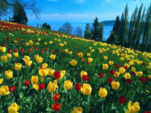 Doux printemps