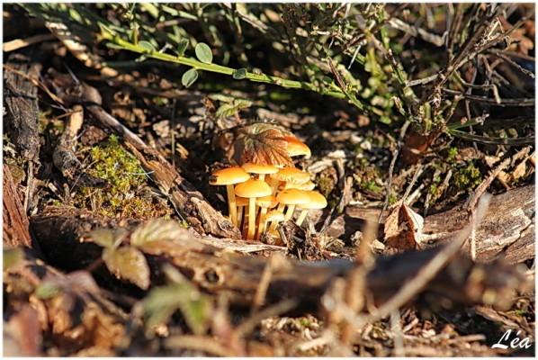 Champignons-8292-champignons.jpg