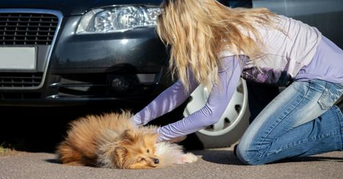 Comment approcher un chat ou un chien blessé ?