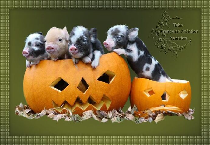 Animaux Halloween (11 à 20)