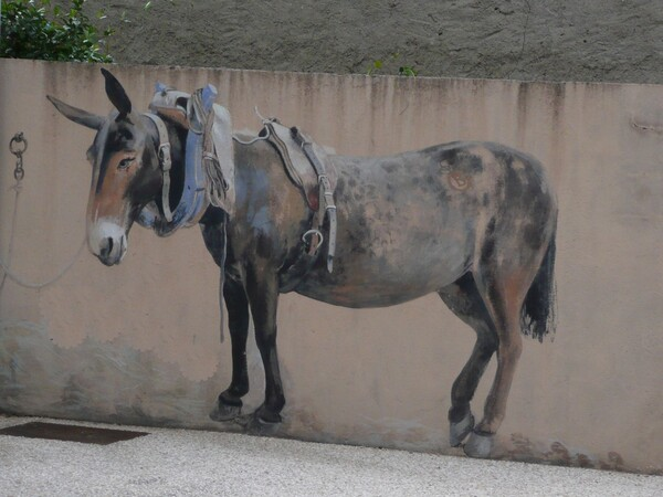 Images insolites de vacances trompe l'oeil mule