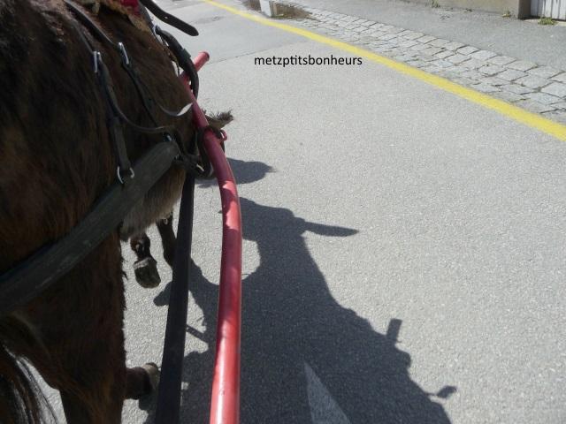 Balade avec des ânes....