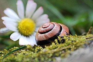 escargot-559080.jpg