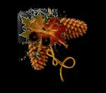 *** Belles couleurs d'automne ***