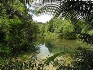 Le parc national de Tanjung Puting