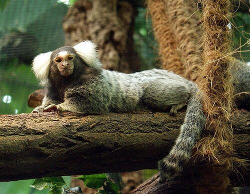 - S2 - Quelle est donc cette chose précieuse que les primates ont oublié  ? -