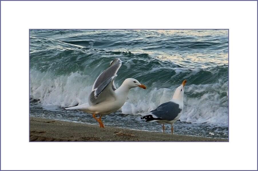 Un peu plus de vagues et avec le retour des détritus avec le retour des touristes !