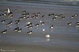 Oiseaux de différentes espèces
