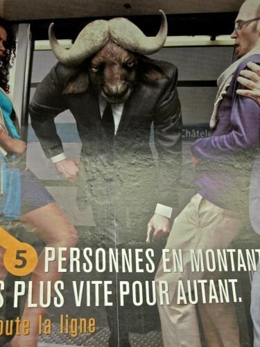 affiche RATP conseils bestiaire buffle