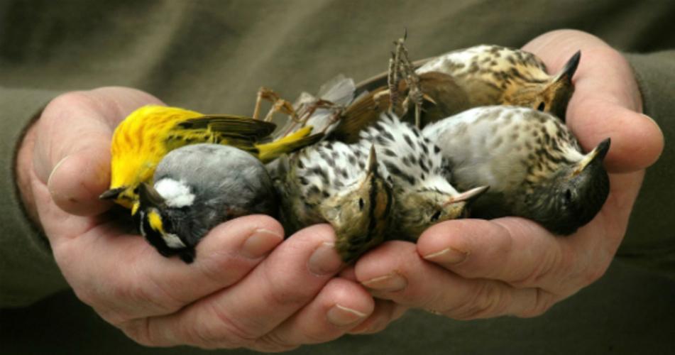 Sauvons les oiseaux