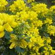 Fleurs de Provence - Avril 2015