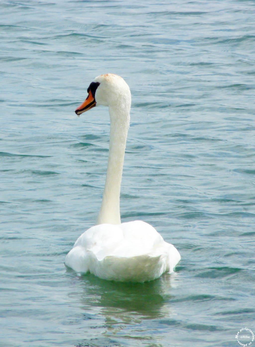 Le lac d'Annecy (2)