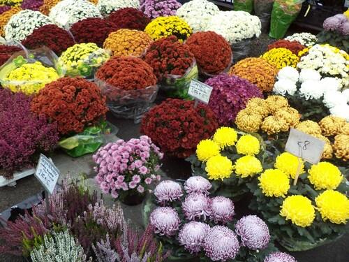 La symbolique des chrysanthèmes