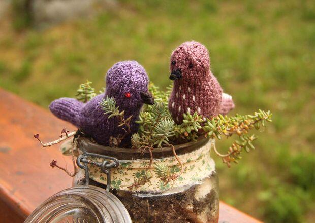 Petits oiseaux... suite