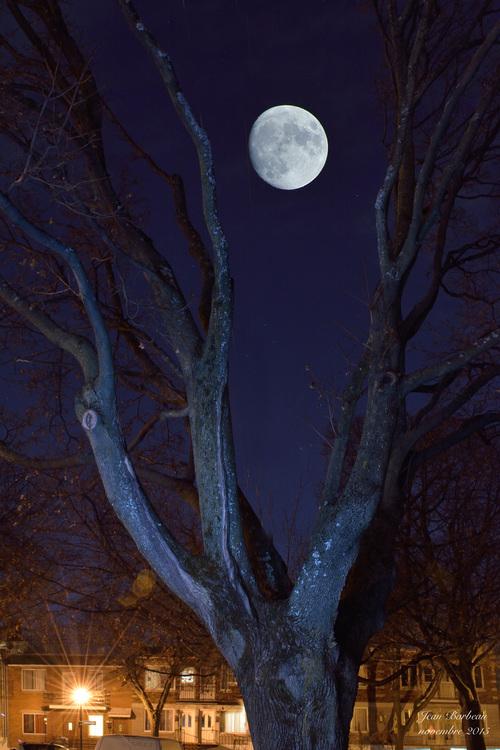 Le vieil arbre et la lune...