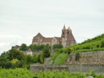 137-Breisach Am Rhein au milieu des vignes