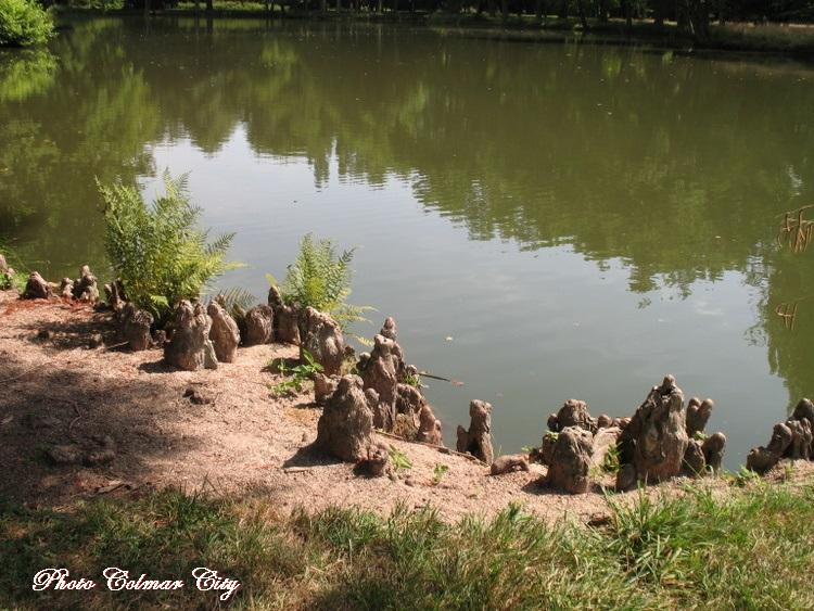 Parc de Schoppenwihr (68) : Cyprès chauve