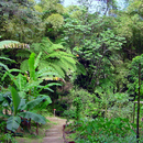 Le jardin créole dans le jardin